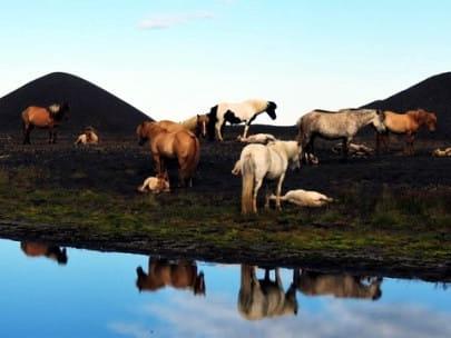 Anna au pair Island erfahrungsbericht