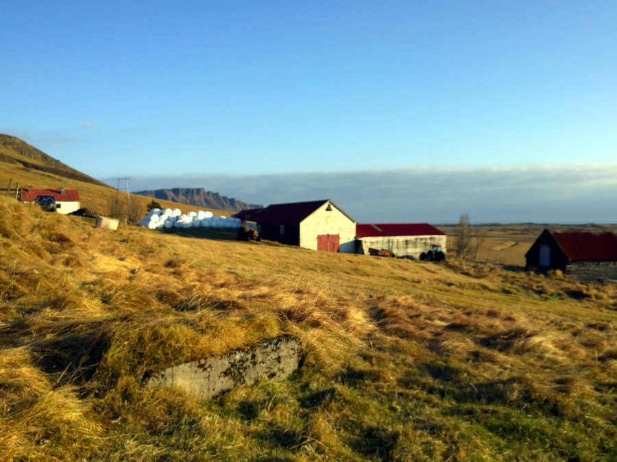 Jana au pair Island erfahrungsbericht