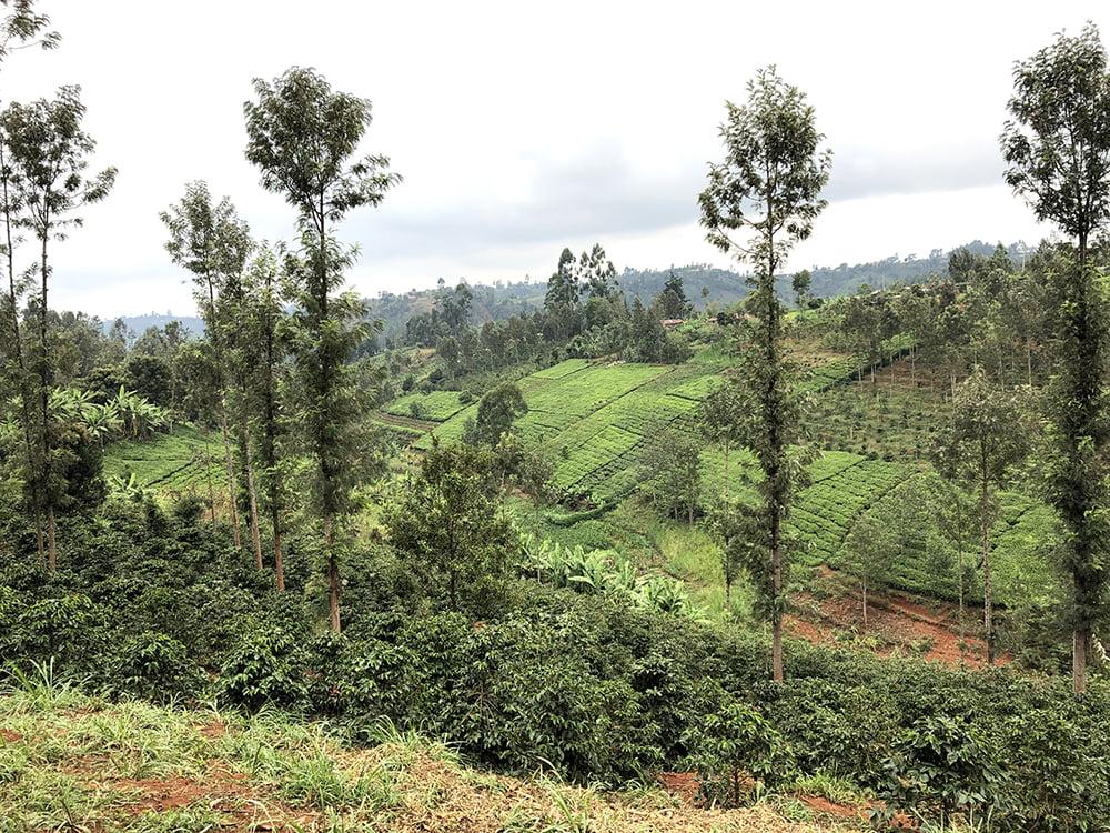 Erfahrungsbericht Freiwilligenarbeit in Kenia von Kira