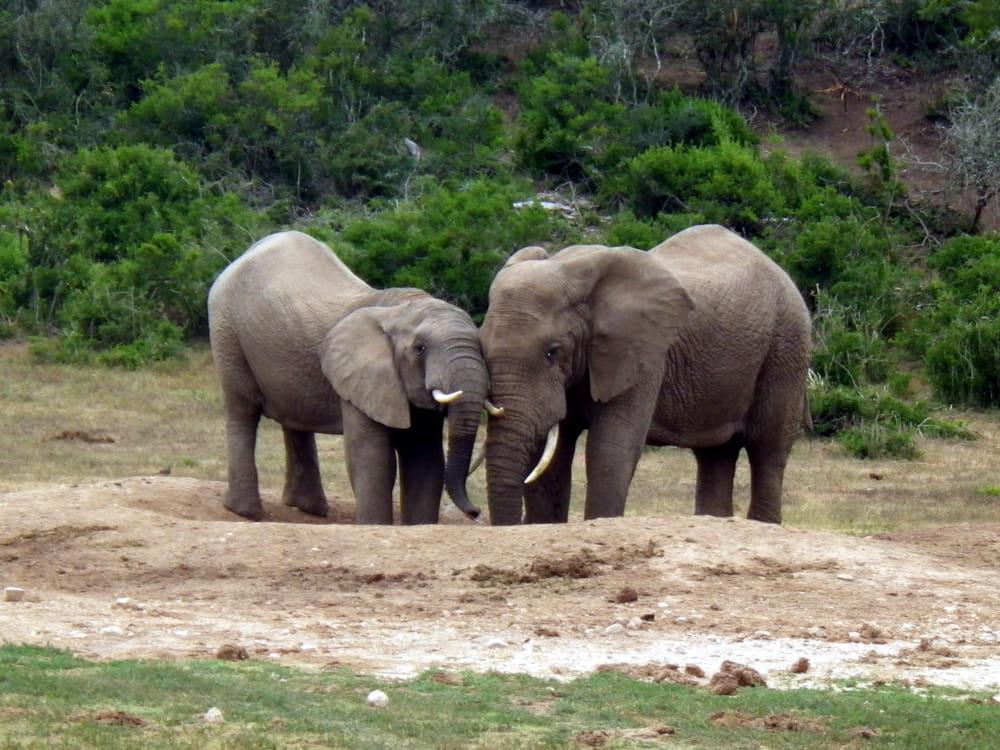 erfahrungsbericht freiwilligenarbeit suedafrika-kap Annelie