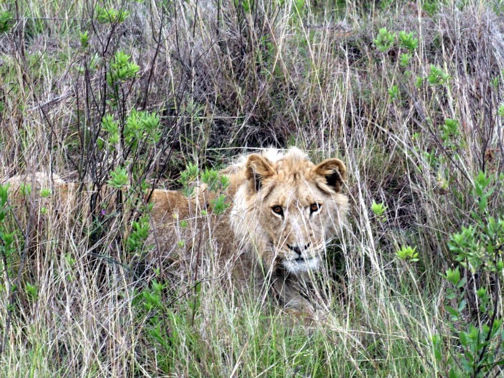 erfahrungsbericht freiwilligenarbeit suedafrika-kap Jonathan